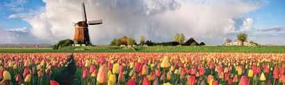 RB Avalon Tulips  A  No ship